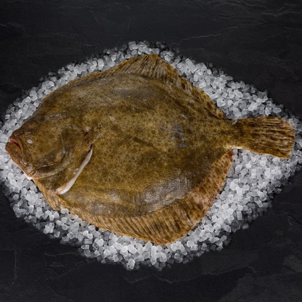 Steinbutt - Wildfang 2-3 kg, mit Kopf, ausgenommen